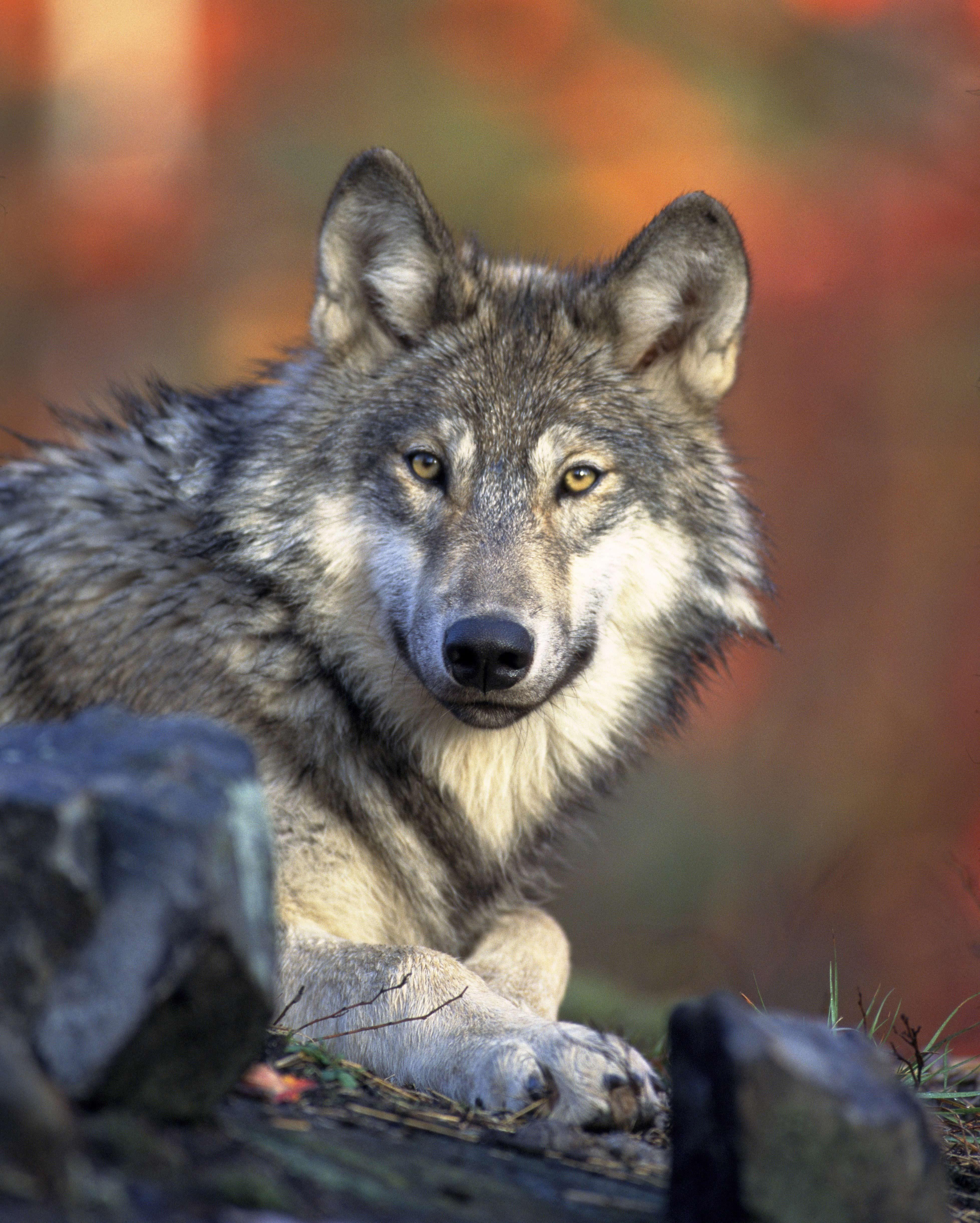 animal-hunter-nature-2361-for-web